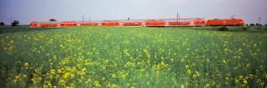 Commuter Train Passing Through Oilseed Rape Fields, Baden-Wurttemberg, Germany