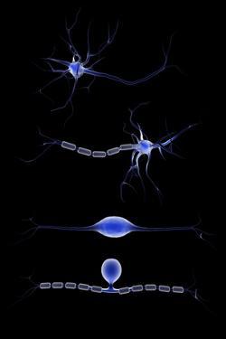 Conceptual Image of a Neuron