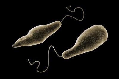 https://imgc.allpostersimages.com/img/posters/conceptual-image-of-euglena_u-L-PN8YH30.jpg?p=0