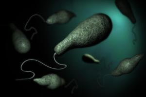 Conceptual Image of Euglena