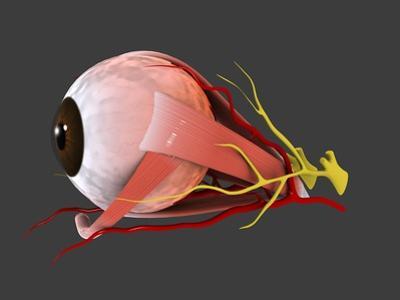 Conceptual Image of Human Eye Anatomy