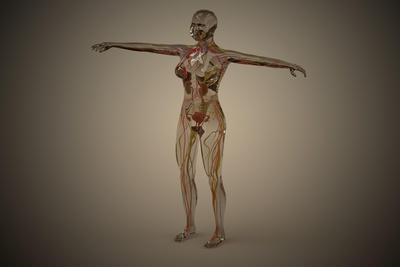 https://imgc.allpostersimages.com/img/posters/conceptual-image-of-human-nervous-system_u-L-PN8K8R0.jpg?artPerspective=n