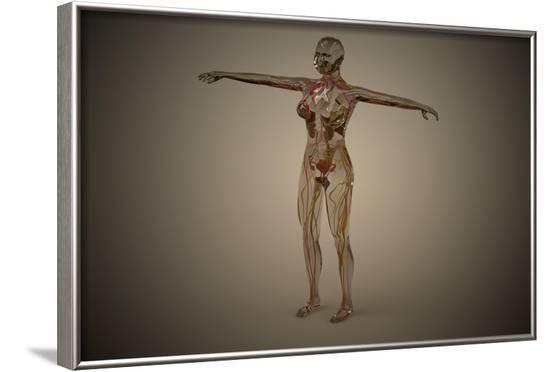 Conceptual Image of Human Nervous System--Framed Art Print