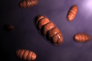 Conceptual Image of Mitochondria