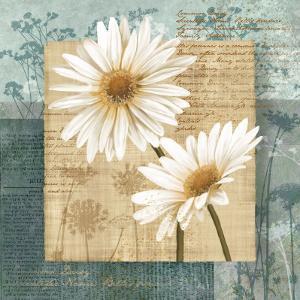 Daisy Field II by Conrad Knutsen