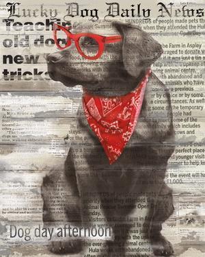 Lucky Dog by Conrad Knutsen