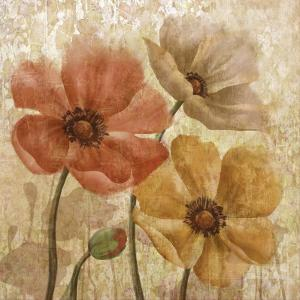 Poppy Allure I by Conrad Knutsen