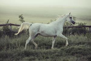 Beautiful Horse Running by conrado