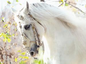 Beautiful White Horse by conrado