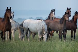 Herd of Horses by conrado