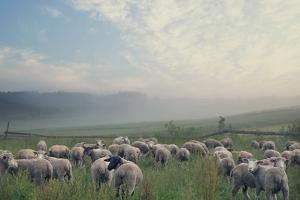 Herd Of Sheep On Beautiful Mountain Meadow by conrado