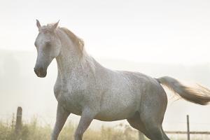 Horse On Freedom by conrado