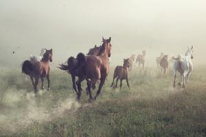 Horses in Dust by conrado