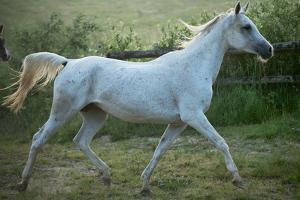 White Horse by conrado