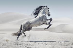 Wild Horse in Dust by conrado