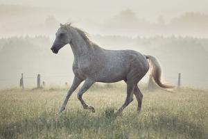 Wild Horse in the Sunrise by conrado