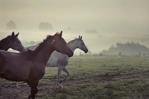 Wild Horses by conrado
