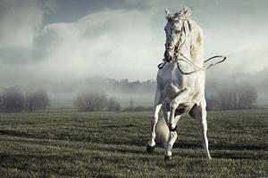 Wild White Horse by conrado