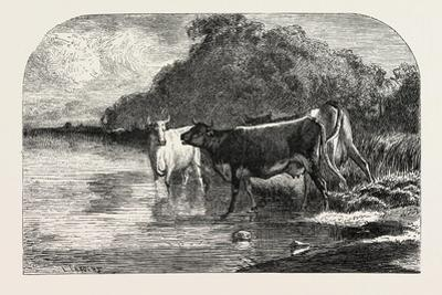 Cows at the Watering Hole, 1855