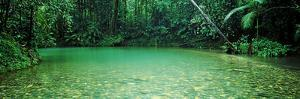 Cooper Creek Flowing Through a Forest, Cape Tribulation, Daintree River, Queensland, Australia