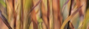 Autumn Grass Scape by Cora Niele