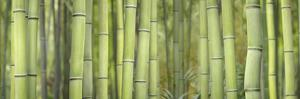 Bamboo Scape by Cora Niele