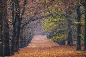 Beech Lane by Cora Niele