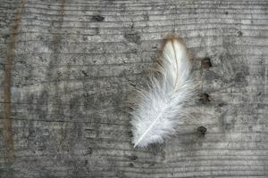 Feather on Rough Wood by Cora Niele