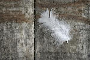 Feather on Wood II by Cora Niele