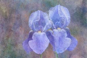 Iris Blue Rhythm by Cora Niele