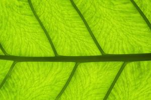 Leaf Texture III by Cora Niele