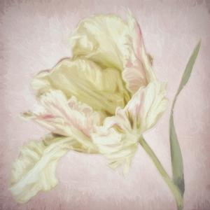 Pink Parrot Tulip Painting I by Cora Niele
