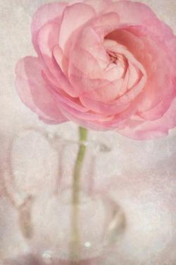 Single Rose Pink Flower by Cora Niele