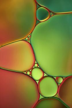 Stained Glass II by Cora Niele