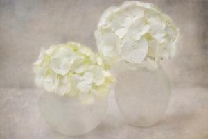 White Hortensia Still Life by Cora Niele