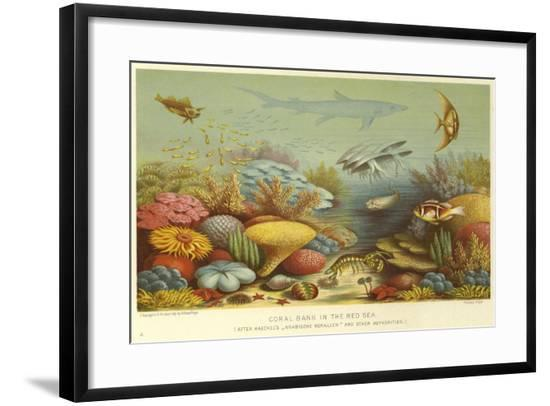 Coral Bank in the Red Sea--Framed Giclee Print