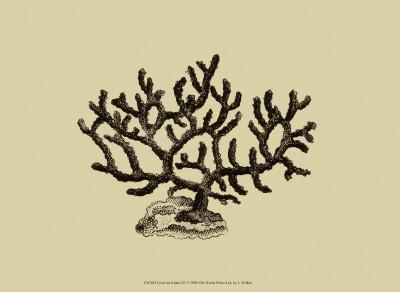 https://imgc.allpostersimages.com/img/posters/coral-on-khaki-iii_u-L-F18H100.jpg?artPerspective=n
