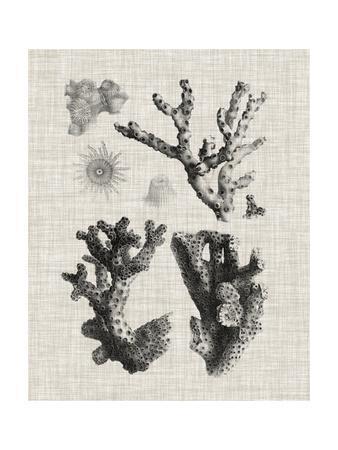 https://imgc.allpostersimages.com/img/posters/coral-specimen-i_u-L-Q1BP1SE0.jpg?artPerspective=n