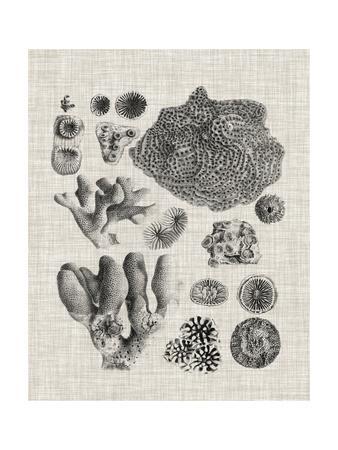 https://imgc.allpostersimages.com/img/posters/coral-specimen-ii_u-L-Q1BP1ZD0.jpg?artPerspective=n