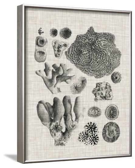 Coral Specimen II--Framed Art Print