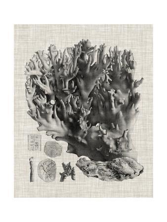 https://imgc.allpostersimages.com/img/posters/coral-specimen-v_u-L-Q1BP20C0.jpg?artPerspective=n
