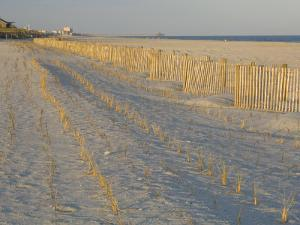 Grasses and Fences on Beach, Folly Island, Charleston, South Carolina, USA by Corey Hilz
