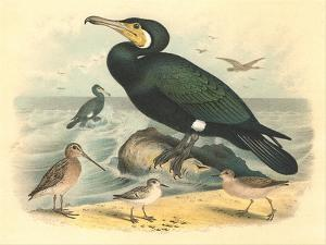 Cormorant and Sandpipers