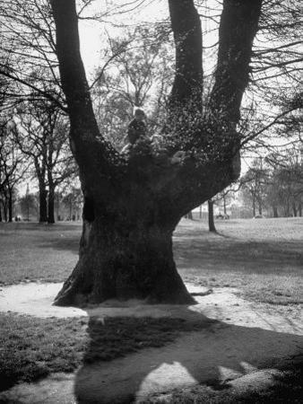 Children Playing and Climbing up Trees by Cornell Capa