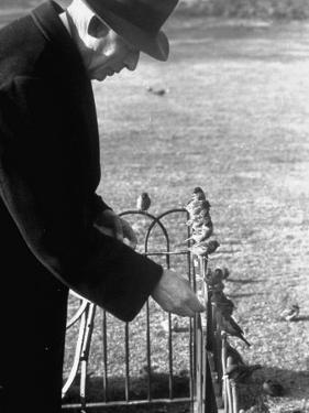 Older Man Feeding Birds Perched on a Fence in Hyde Park by Cornell Capa