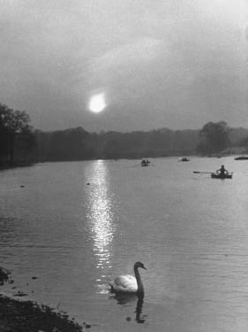 Swan on the Serpentine During the Mmonlight by Cornell Capa