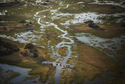 A Group of Elephants in the Okavango Delta Wades in Water That Floods the Delta Annually by Cory Richards
