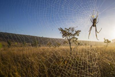 A Spider on Web in Angola by Cory Richards