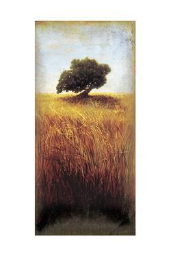 The Last Oak by Cory Steffen