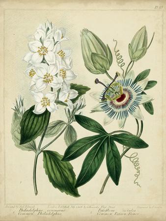 https://imgc.allpostersimages.com/img/posters/cottage-florals-ii_u-L-PNBG090.jpg?p=0